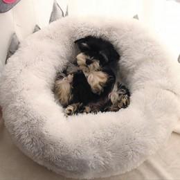 Perrera perro gato redondo invierno cálido saco de dormir de felpa larga Super suave cama para mascotas cachorro cojín Mat gato