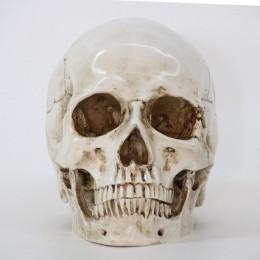 Estatuas escultura resina Halloween decoración del hogar artesanía decorativa cráneo tamaño 1:1 modelo vida réplica médica de al